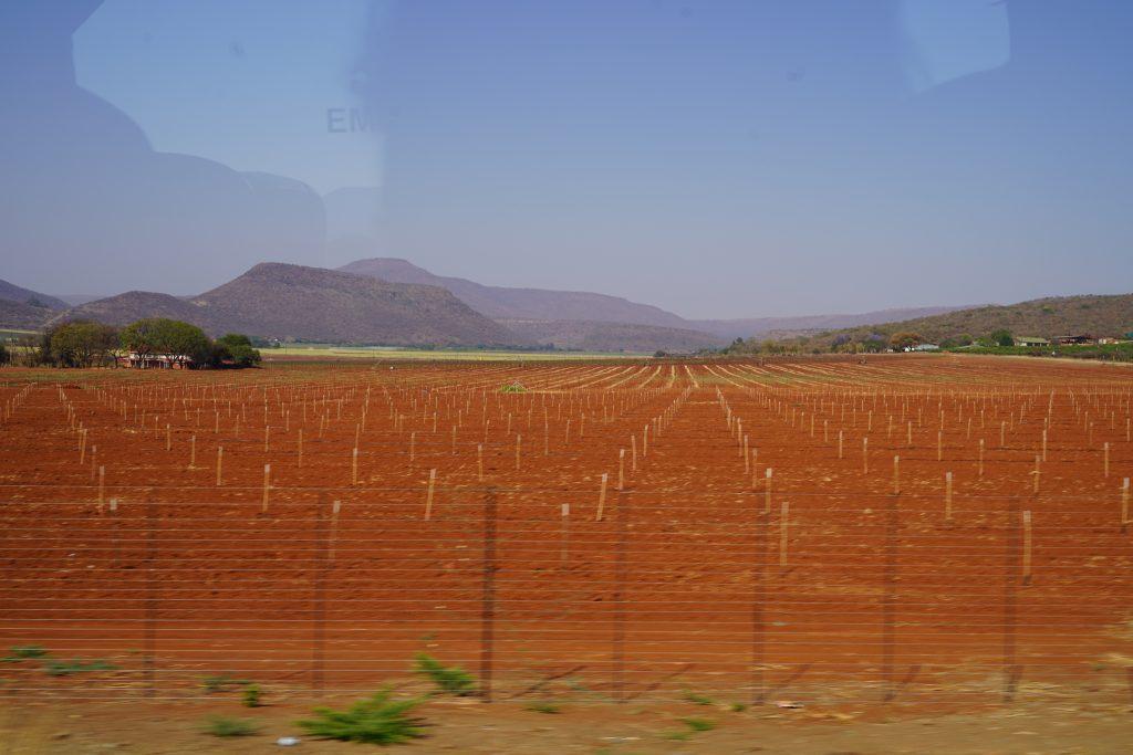 Fertile land for planting.