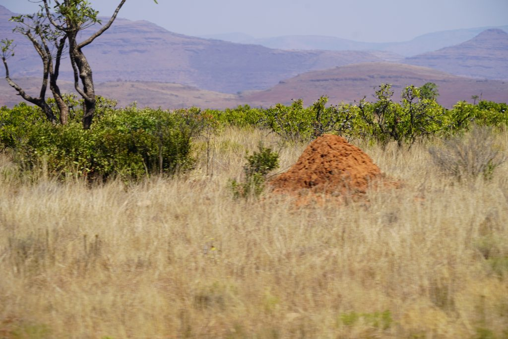 Tall Anthill, a common sight all around.