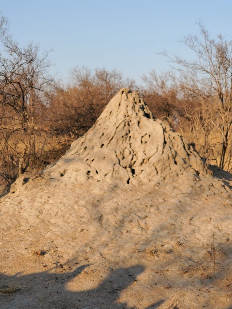 Tall Anthill.