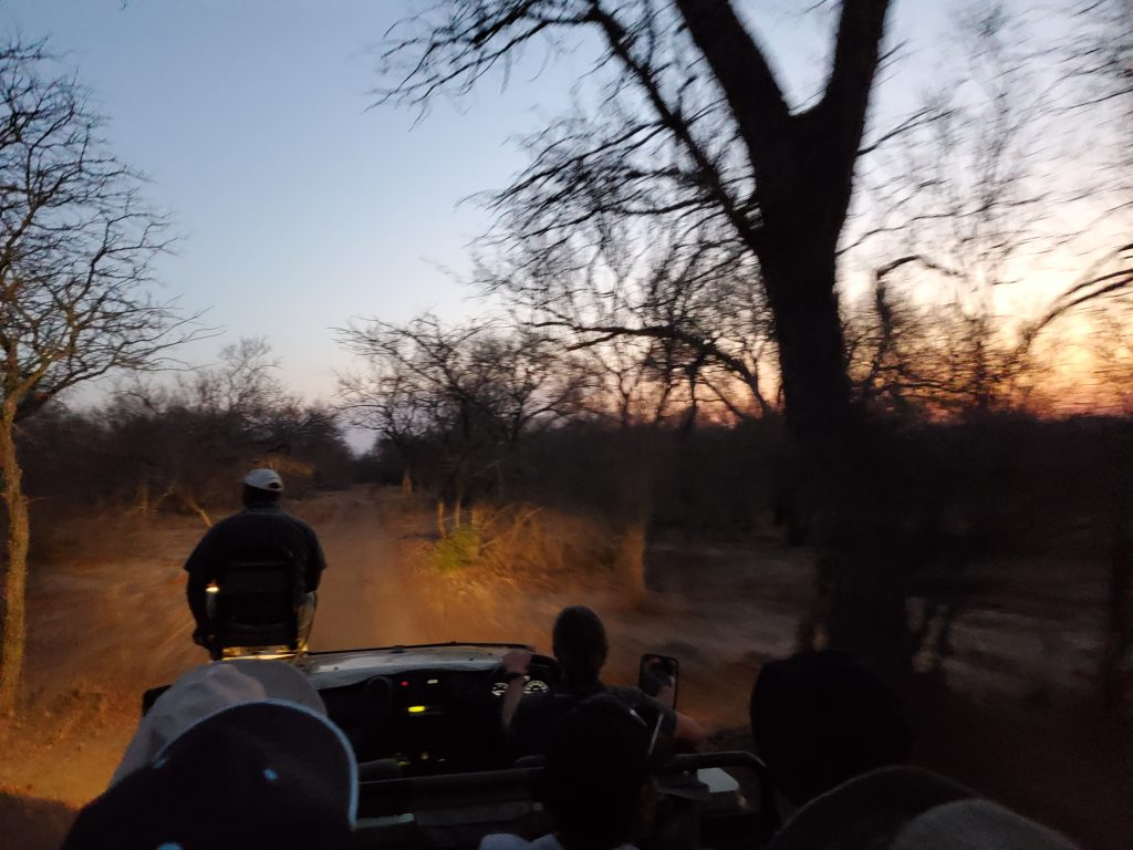 Night Safari, with a bright light shining to look for the animals and to direct the way home.