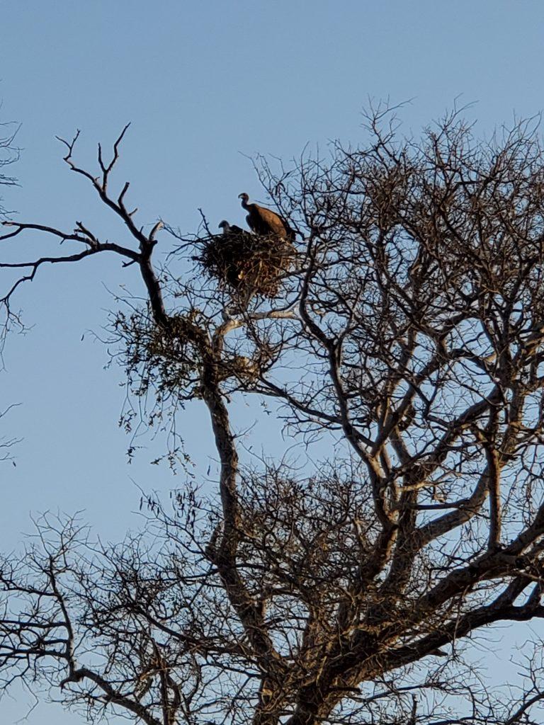 Vultures, the birds of prey.