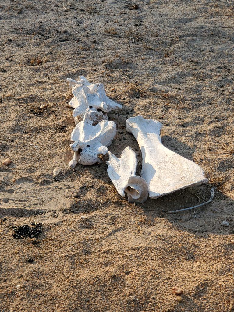 The carcass of an animal.