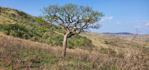 SA Landscape Change3