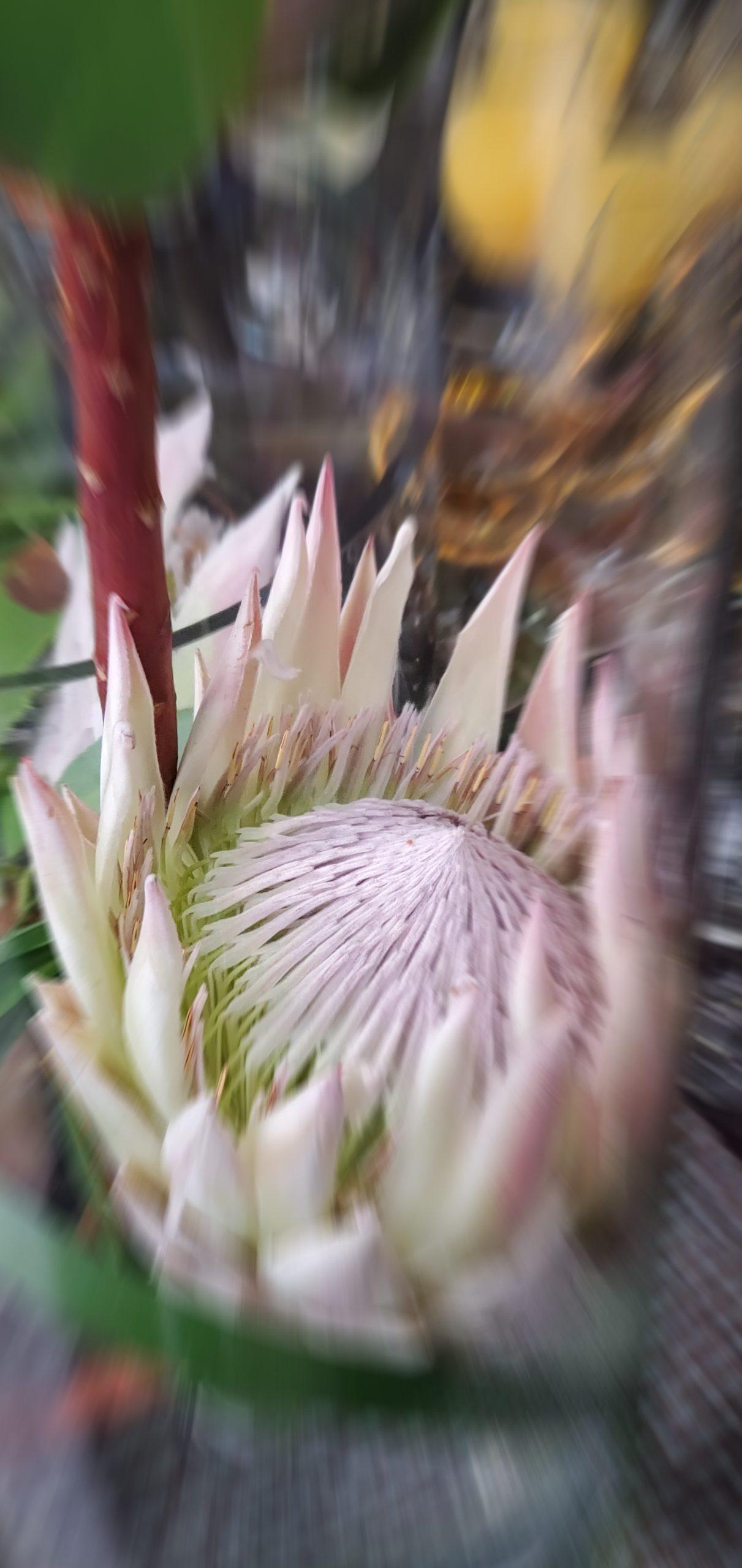 Flowers2 at Simola