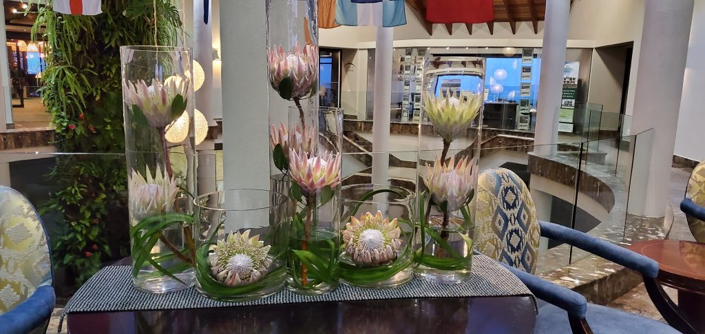 King Protea, South Africa's National Flower