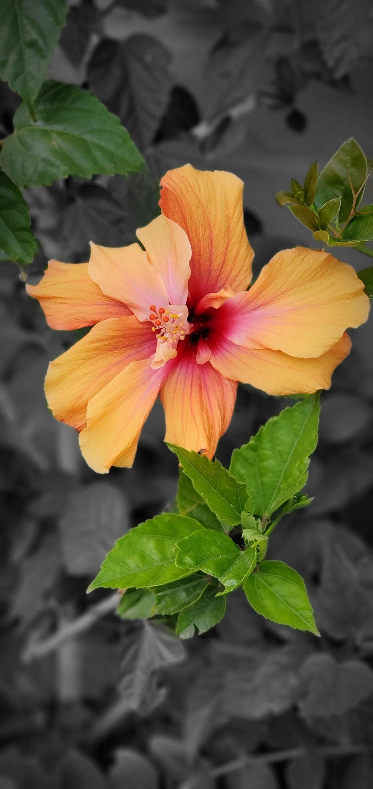 Flowers5 at Simola