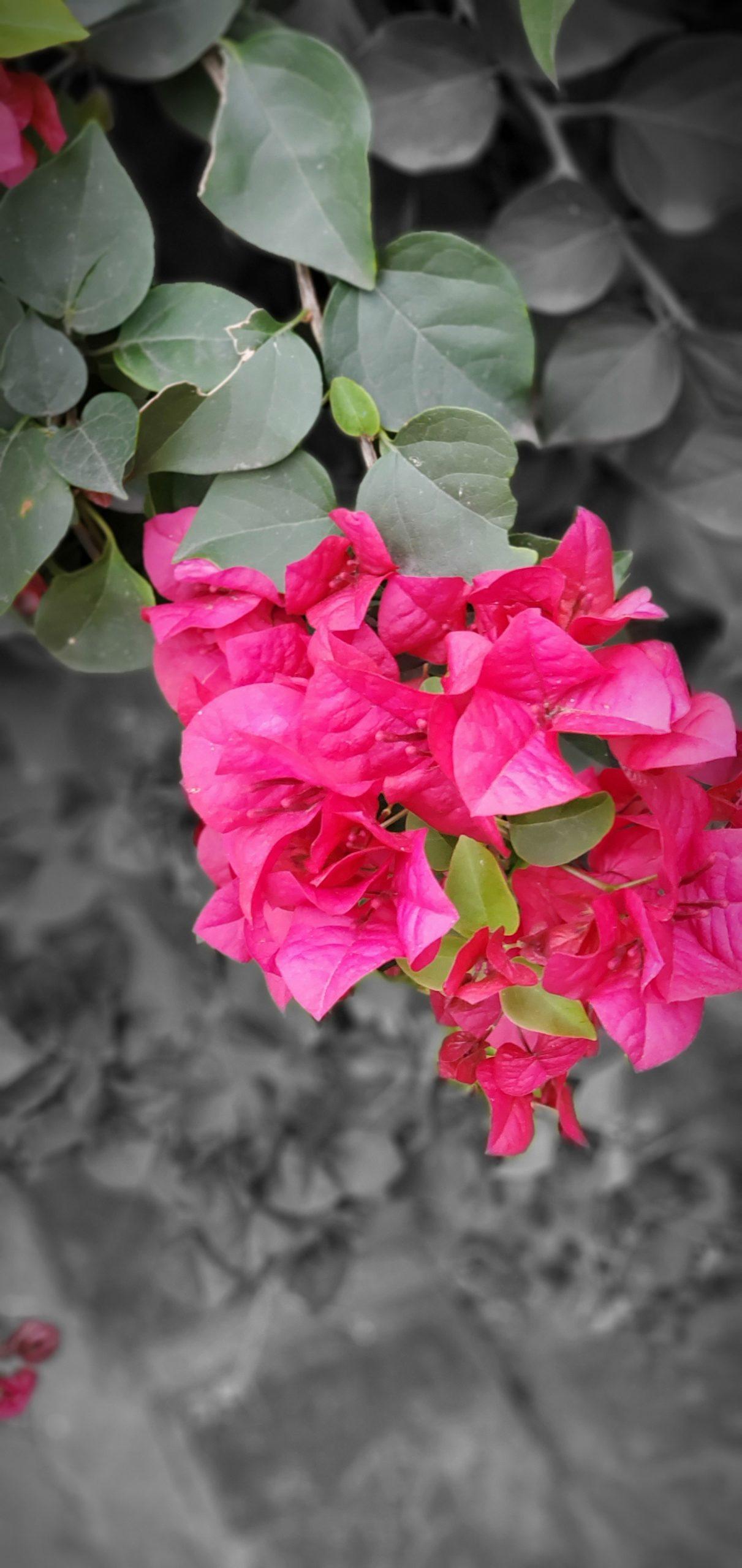 Flowers4 at Simola