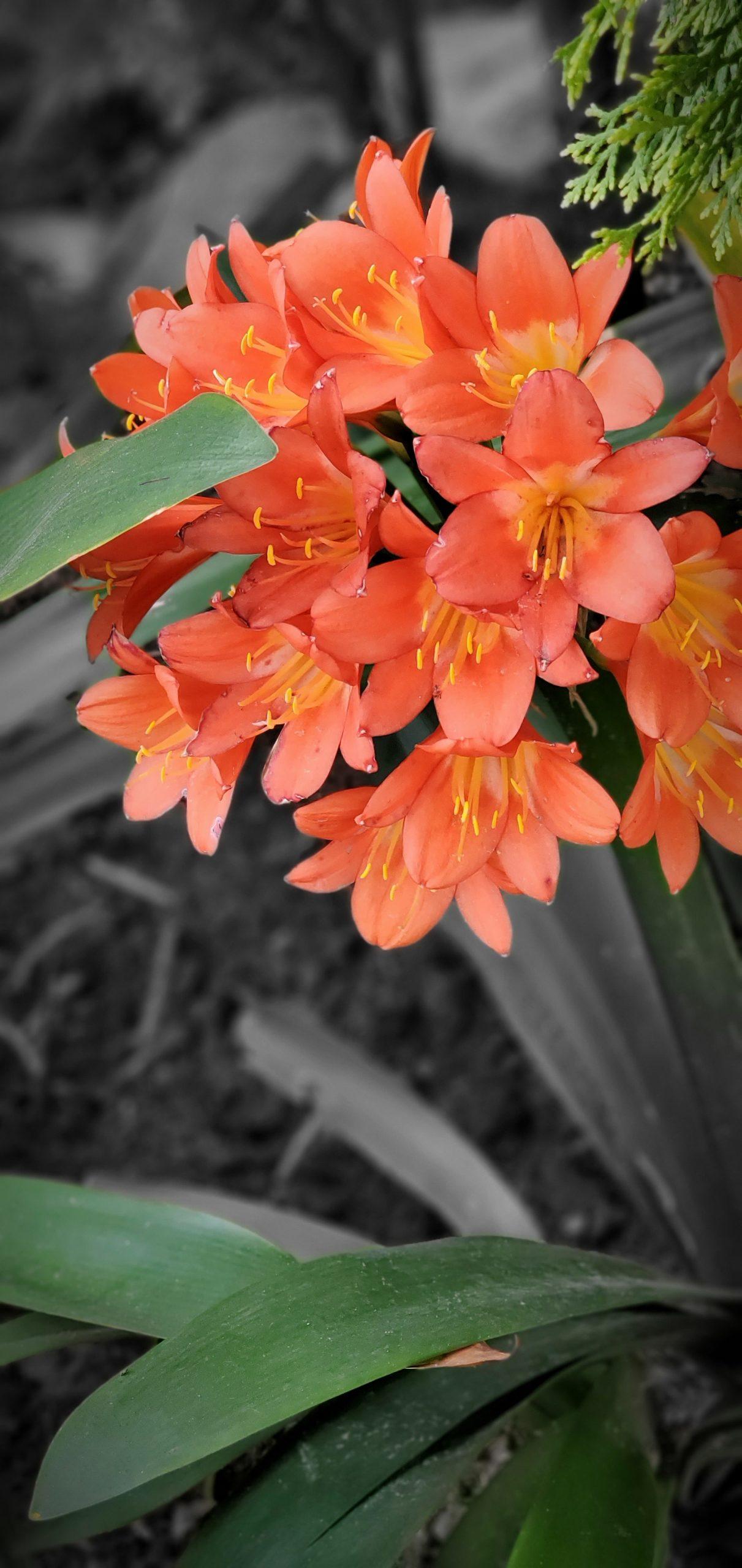 Flowers7 at Simola