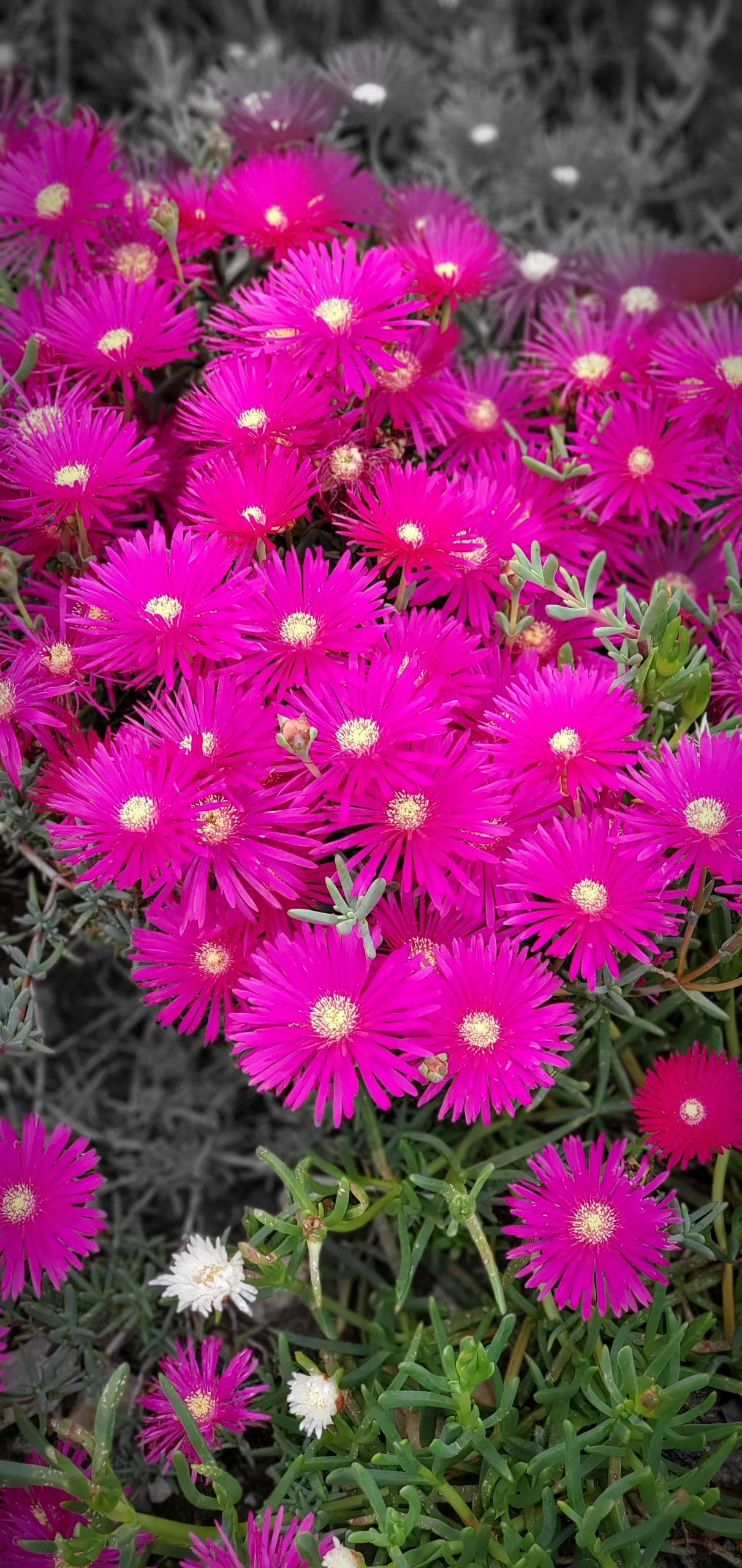 Flowers9 at Simola