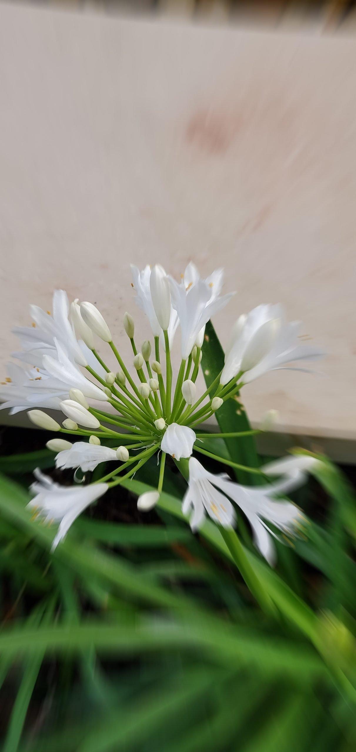 Flowers8 at Simola