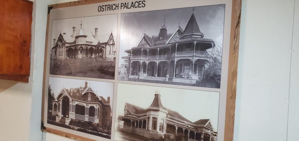 The ostrich palaces of Oudtshoorn are a common sight in the Klein Karoo town. The great feather boom began in 1870 with ostrich feathers being exported at around 450 000 kilograms a year.