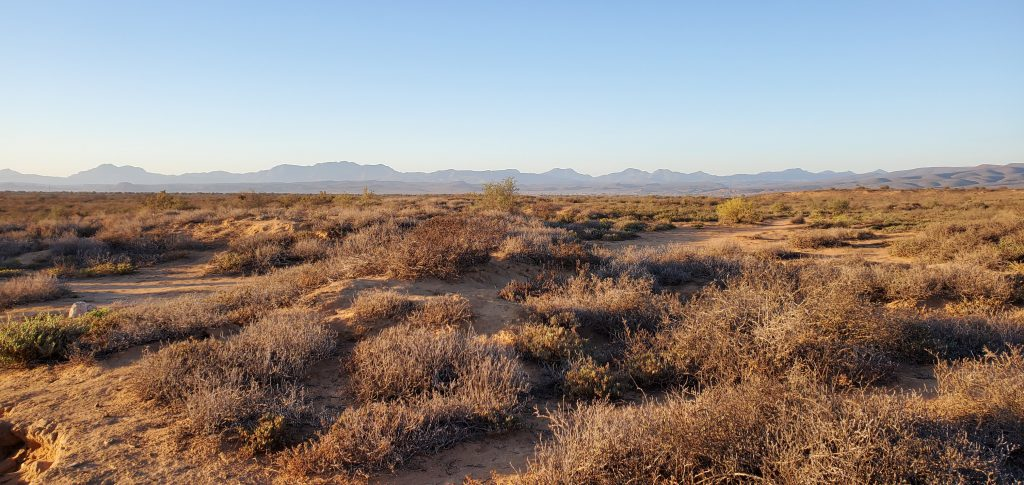The vast emptiness of the sub-Saharan desert. Which direction to look for the little creatures?