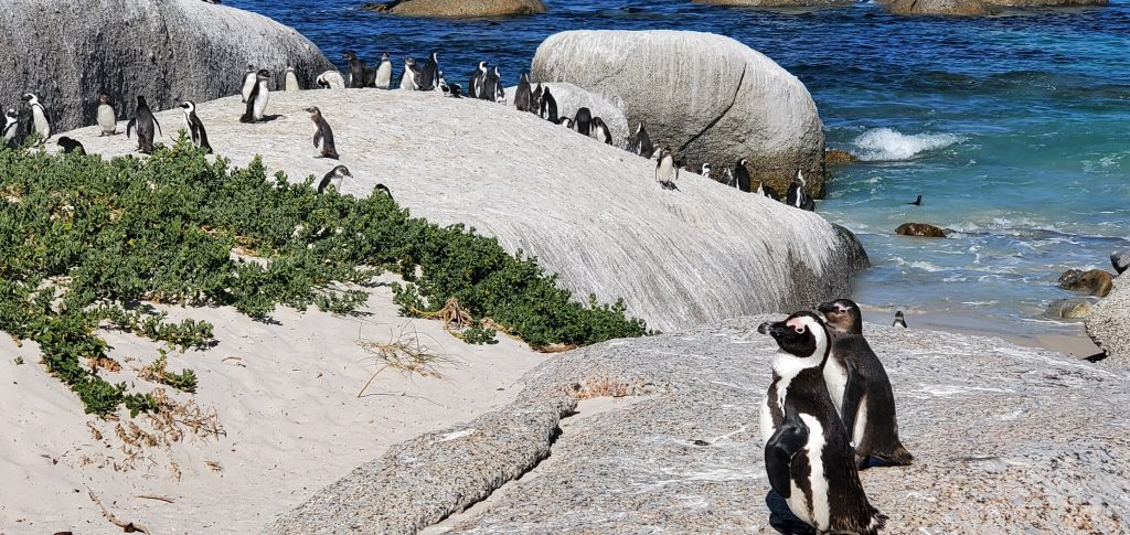 OMG, we then saw an entire group of penguins