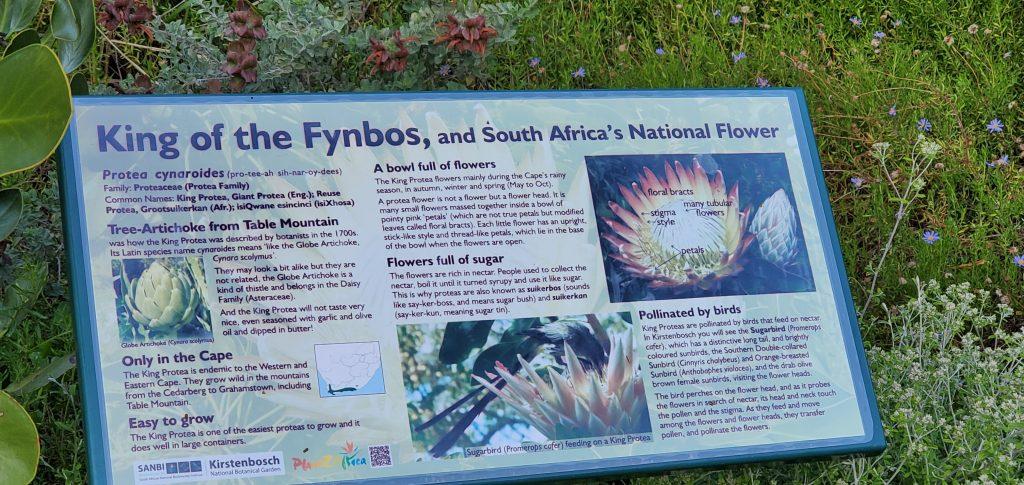 King of Fynbos