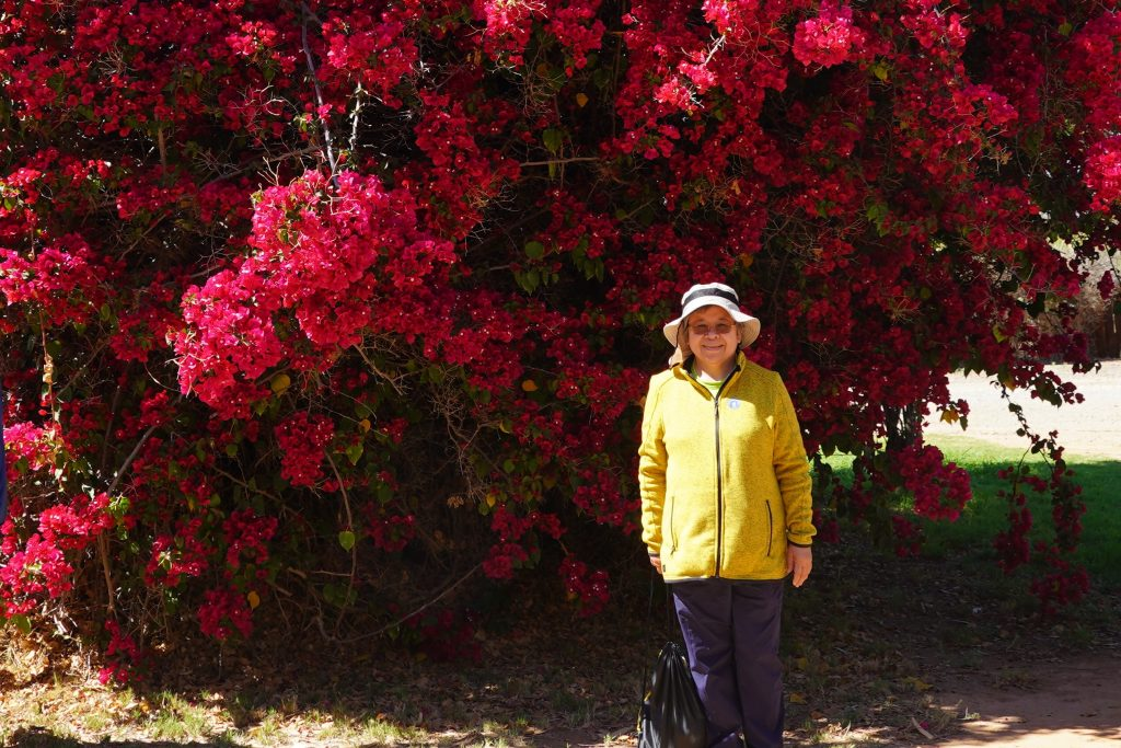Bougainvillea needs at least 6 hours of full sun a day to flower profusely and look its best.