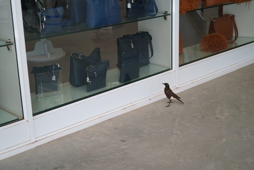 A Little Birdie Window Shopping He seemed to be eyeing the handbag, likely window shopping for his girlfriend. :)