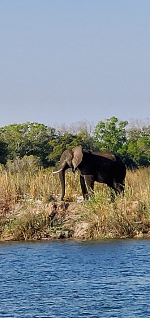 Elephant on the banks of the river.