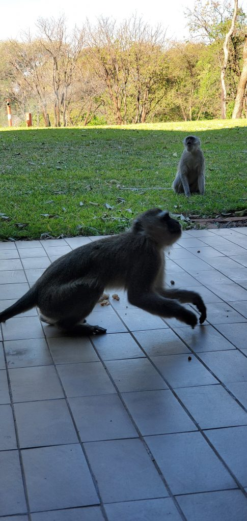 Someone from above us dropped a bag of peanuts and monkeys came to visit right outside our balcony. We had to quickly close our balcony door and stay inside.